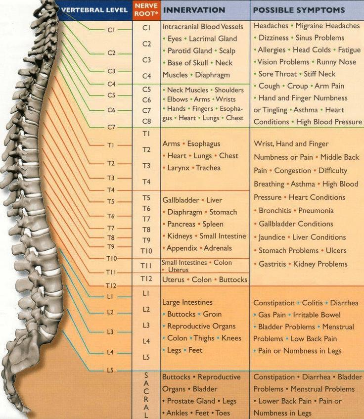 Nerve Chart Grand Rapids MI